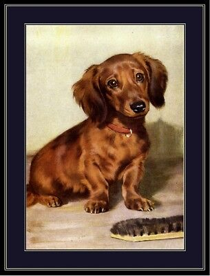 English Print Dachshund Doxie Long Haired Puppy Dog Vintage Art Poster Picture ()