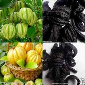 Where can i purchase garcinia cambogia