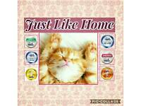 JUST LIKE HOME Pet walking/Sitting service