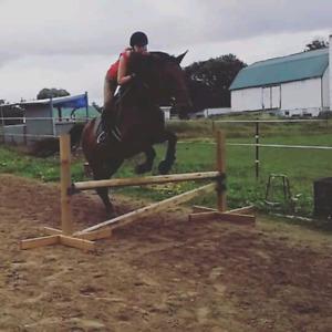 Big solid gelding for part board