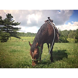 Looking for a pony or a mini