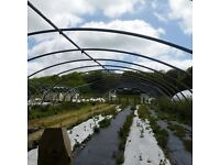 30m x 9m x 3.5m commercial size polytunnel can deliver
