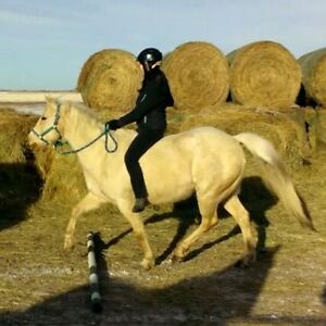 2 Horses for Half Lease