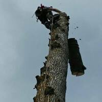 GUELPH TREE REMOVAL, PRUNING, STUMP GRINDING, FIREWOOD LIC & INS