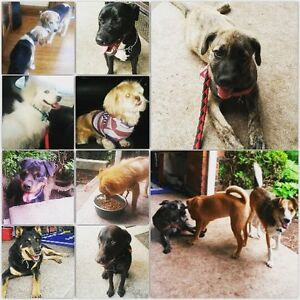 DAWGS & PAWZ BOARDING AND TEMPORARY REHOMING - GTA