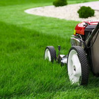289 788 6118 TEXT FOR FAST GRASS CUTTING LAWN MAINTENANCE
