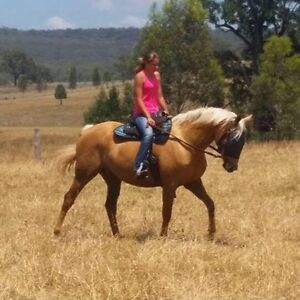 Looking for unbroken/Unhandled pony Sandy Hollow Muswellbrook Area Preview