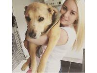 Dog walker/ sitter - Hucknall Nottingham area