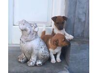 Beagle x jackrussell