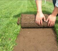 WANT A NICE YARD or TOP GRASS FOR LOW COAST  ?