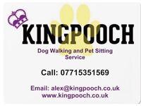 King Pooch Dog Walking