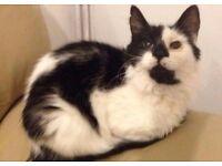 Black/ white Fluffy cat needs a loving home