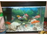 Fish tank with all fish and equipment