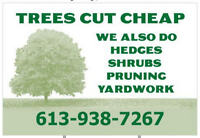 "Hedges and Trees Trimmed ""Sale or Special"""