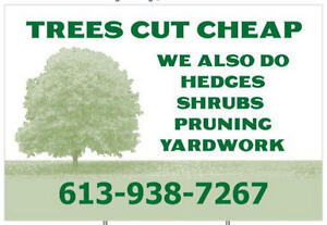 """Hedges and Trees Trimmed """"Sale or Special"""" Cornwall Ontario image 1"""