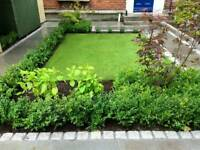 * 20 YEARS EXPERIENCE * GARDENING & TREE SERVICES MANCHESTER