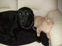 Bella's Cats & Dogs - Cat sitting & Dog Walking