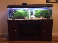 4 Feet Fish Tank