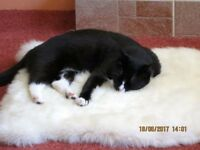 TINY BLACK/ WHITE 3 YRS OLD