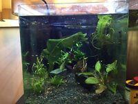 55 Litre cube aquarium for sale