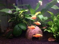 Tropical fish tank 14 gallon