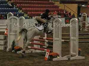 Equestrian coaching