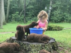 Adopt Dogs & Puppies Locally in Norfolk County | Pets | Kijiji