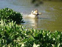 Home Dog Boarding in Epsom