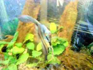 Tropical Fish Tank Cleaning Service London Ontario image 7