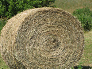 High quality round hay bales