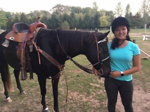 TB/QH Mare - 5 years old - Western/English
