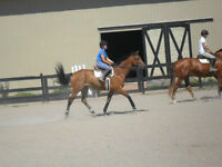 English Riding Lessons in HRM