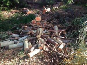 Firewood - various lengths and diameters, mostly gum Hawthorndene Mitcham Area Preview