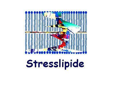 Stresslipide