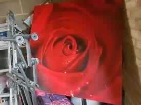 Large raindrop rose canvas