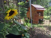 NEW!! Rent Backyard Chickens Package!!