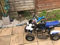 hawk moto only 3 months old RUNS PERFECT BARGAIN PRICE NO OFFERS