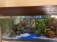 85L Tropical Fish Tank with loads of extras