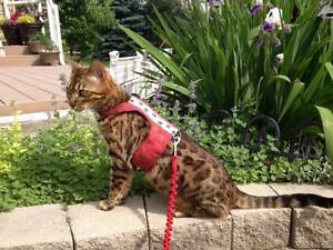 Custom Cat Harnesses!! Edmonton Edmonton Area image 9