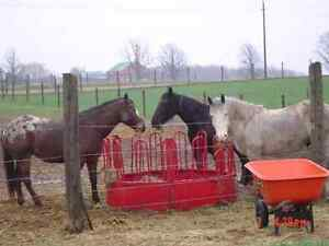 Horses Kitchener / Waterloo Kitchener Area image 3