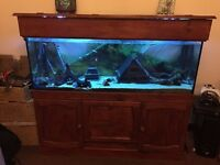 4 Ft Fish Tank and cabinet. Includes Heater External Filter,Wood and caves including a Slate House