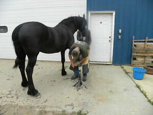 Professional Farrier Service