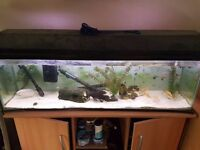tropical fish for sale with 4ft tanks