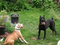 Dog Walking ^ All Petcare Services