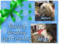 Grooming low cost great service