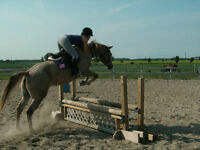 Safe, Fun, Versatile Mare for Part Board - trails/showing avail!