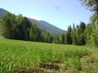Pristine 10 acres with 2 creeks on Martens Rd Slocan.