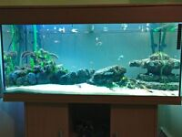 180L tank with stand, external Eheim Professional 3e filter and fish
