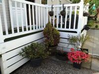 Sheraton bluebird double bedroom en suite singl bedroom aged 50s only garden parking decking lovely