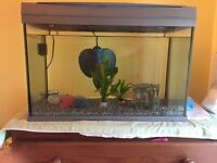 60L Tetra Tank with Accessories